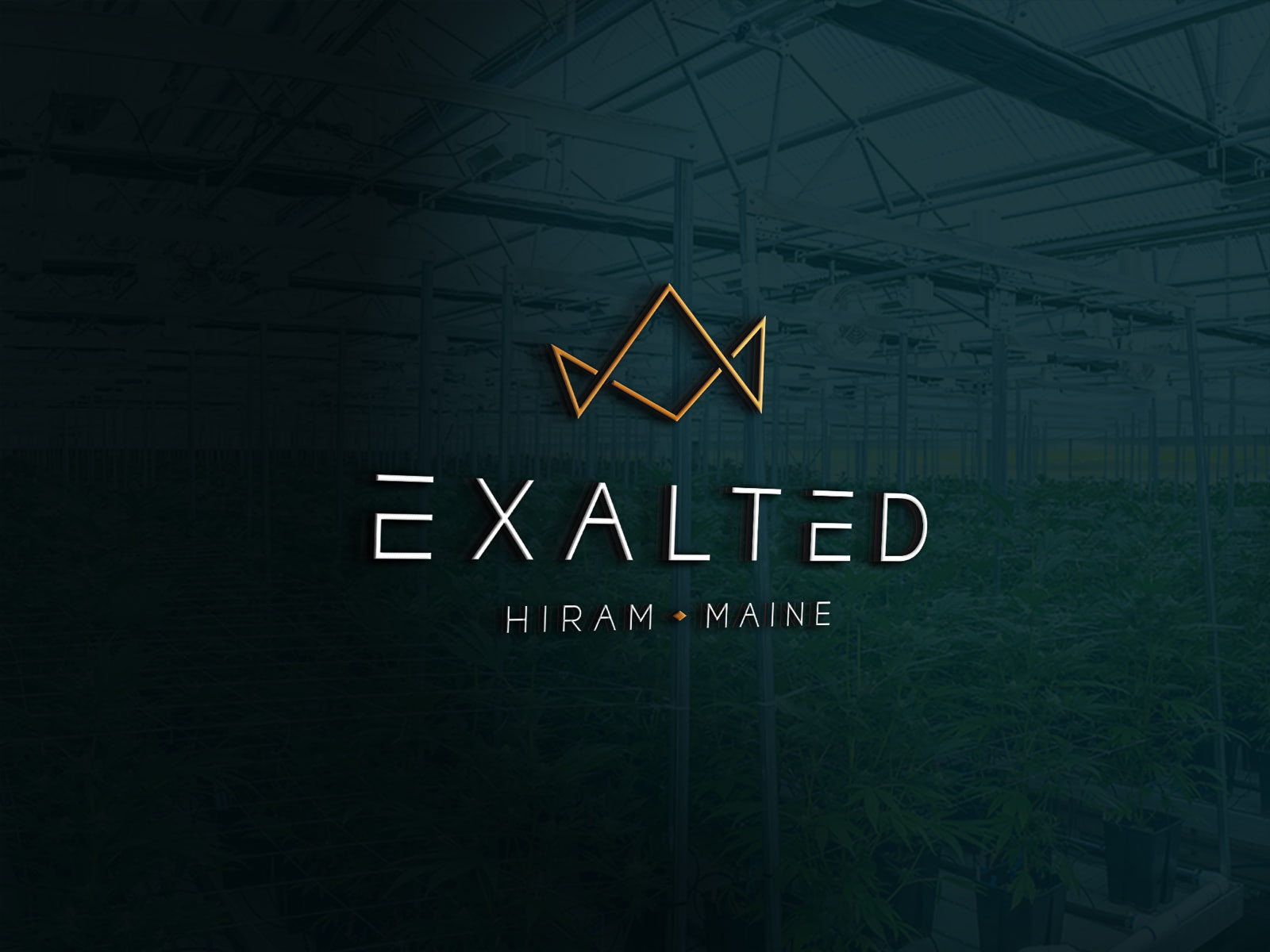 Mockup of the Exalted logo on a window with a cannabis growing facility in the background