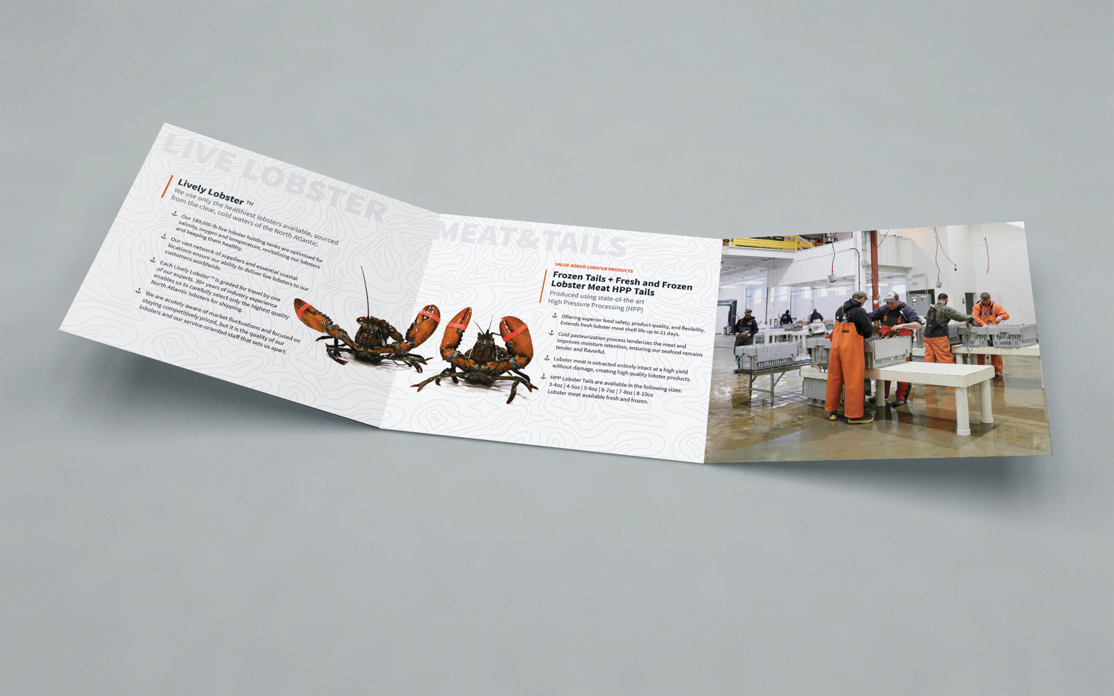 Maine Coast trifold brochure full spread with high resolution photography and text on a topographical map background