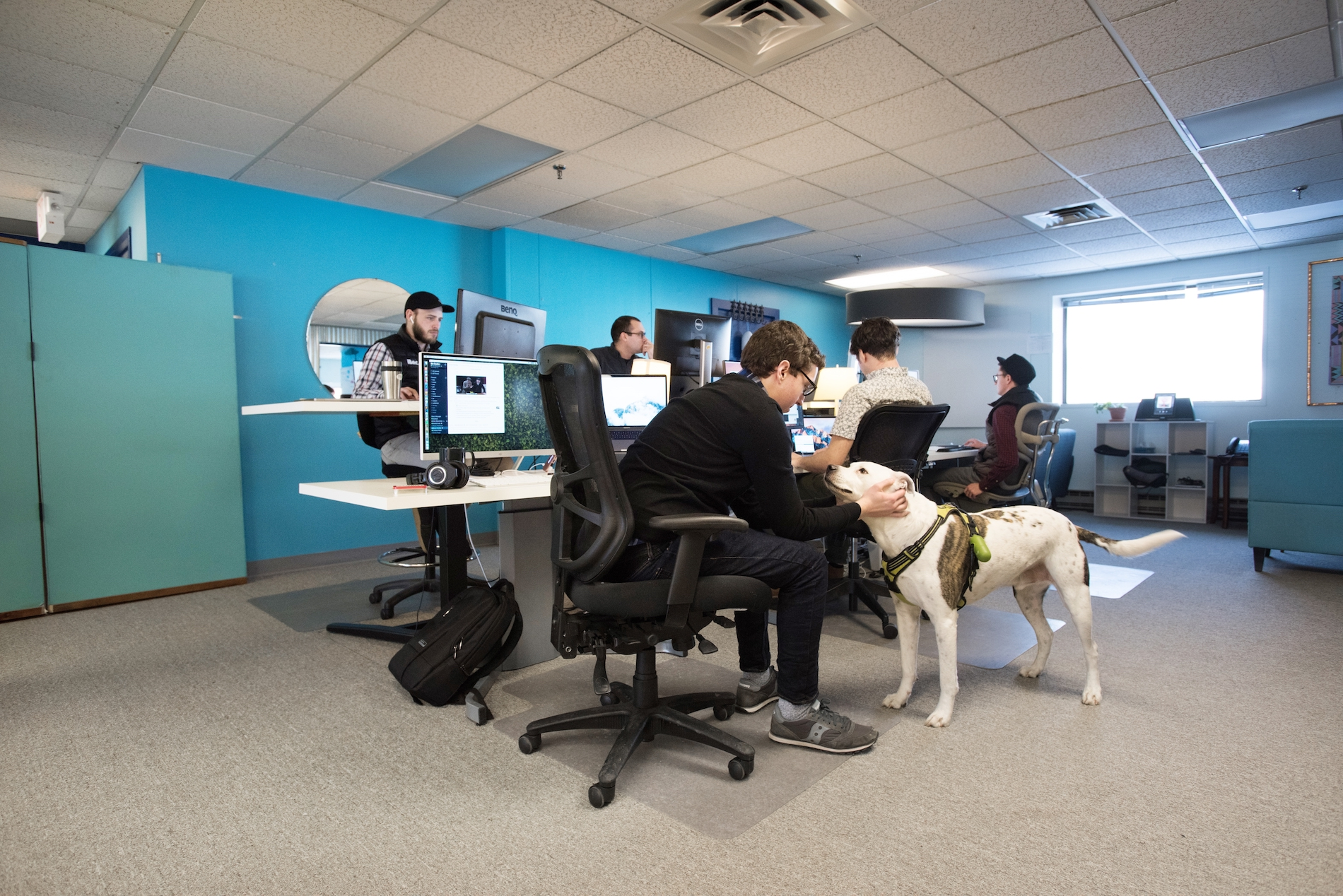 iBec employees sit at their desks in an open concept work area of the office. Developer, Nate Blanchette, leans over to pet the guest office dog.