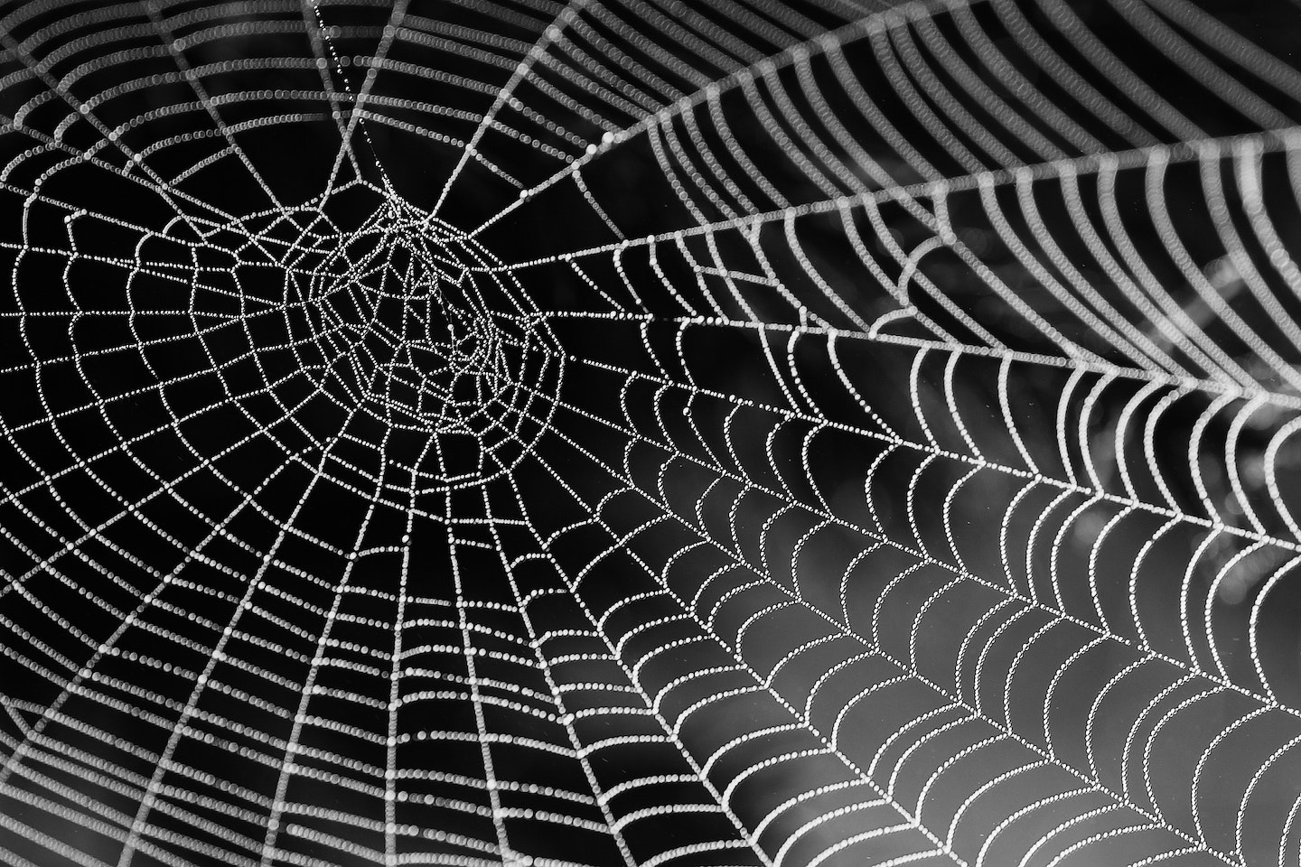 Black and white photo of a spider web with beads of moisture