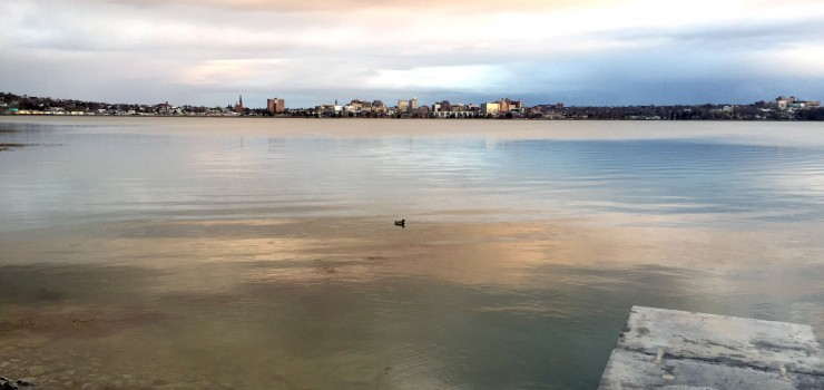 Photo of the Back Bay with a duck in the water and cloudy skies